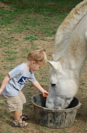 Horse Care Services in Ashburn